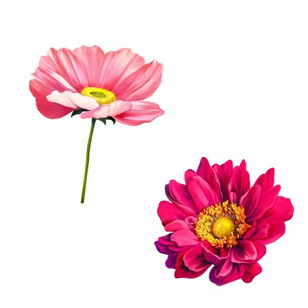 papaver: Tender pink poppy flower and Mona Lisa flower isolated on white background Stock Photo