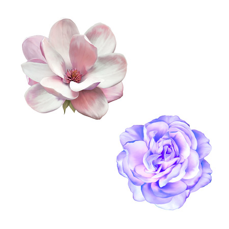 roses  petals: illustration of blue purple rose and magnolia flower isolated on white background