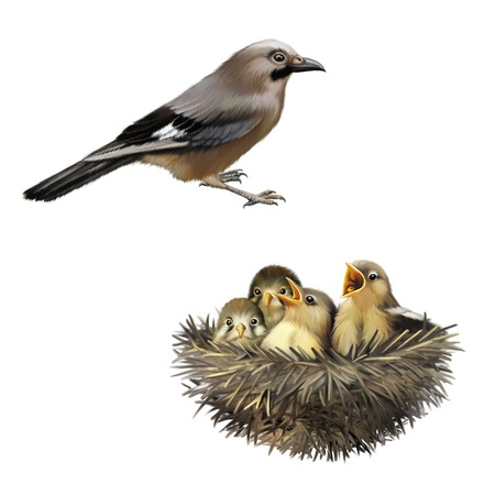 Four hungry baby sparrows in a nest wanting the mother bird to come and feed them, Bird nest with young birds, mother bird photo