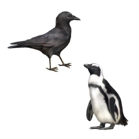 carrion: Side view of a Carrion Crow, Corvus corone, gentoo penguin, Illustration isolated on white background