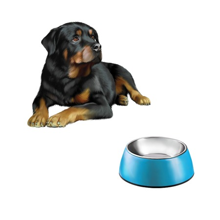 bawl: Rottweiler in front, Blue Pet bowl isolated on the white background