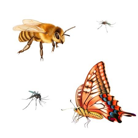 culicidae: Pretty bee, Red and yellow butterfly, Old World Swallowtail (Papilio machaon) butterfly. isolated on the white