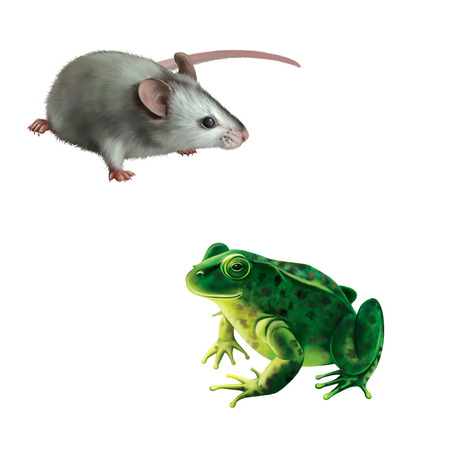 water frog: Cute gray mouse, Green frog with spots, spotted toad isolated on white background