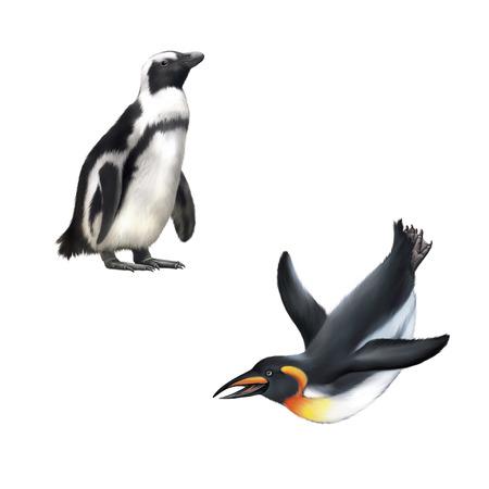 gentoo: gentoo penguin. Vector illustration isolated on white background Stock Photo