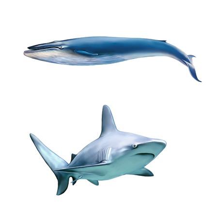 een grote grijze rifhaai de mond en tanden en op een witte achtergrond Stockfoto
