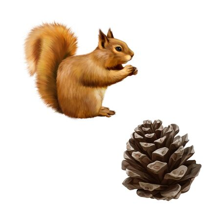 Pine cone, Red Squirrel (Sciurus Vulgaris) eating, side view, isolated on white background photo