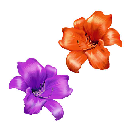 lemony: illustration of Bright pink and red lily flower. isolated on a white background