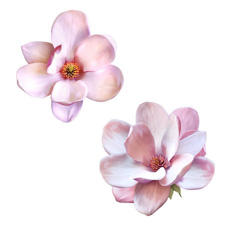 Ilustración de una tierna flor rosa magnolia aislada en el fondo blanco