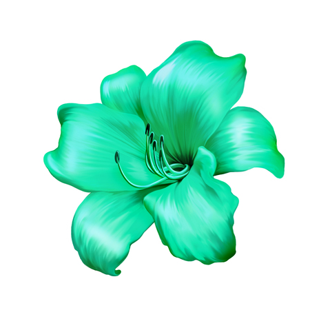 illustration of green blue lily flower isolated on white background illustration