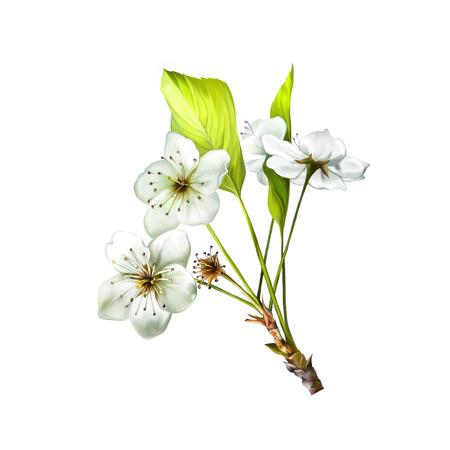 Ilustración De La Flor De Las Flores De Cerezo Con Hojas Rama De