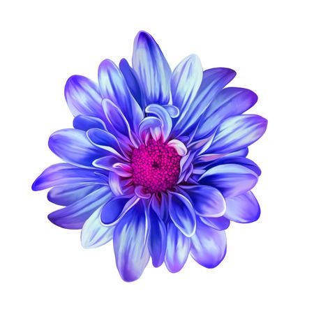 mona lisa: Bright Mona Lisa flower, Spring flower.Isolated on white background Stock Photo