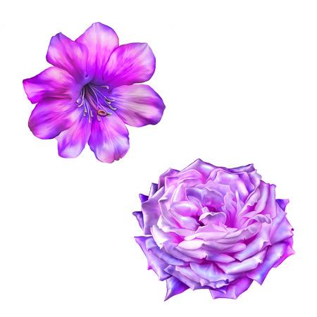 Beautiful bright pink rose Flower. Isolated on white. Illustration illustration