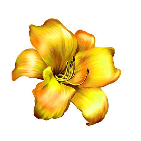 lemony: illustration of yellow lily flower isolated on white background Stock Photo