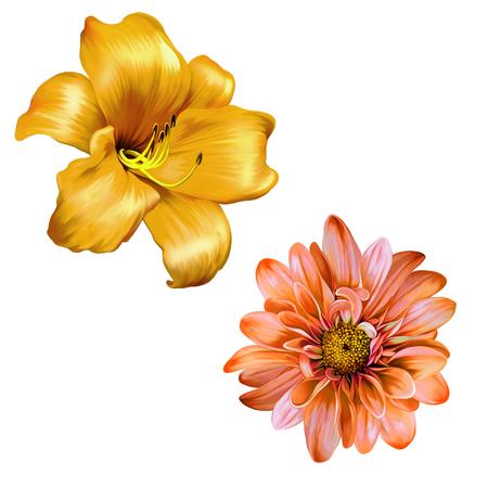 lemony: illustration of Orange red lily. isolated on a white background