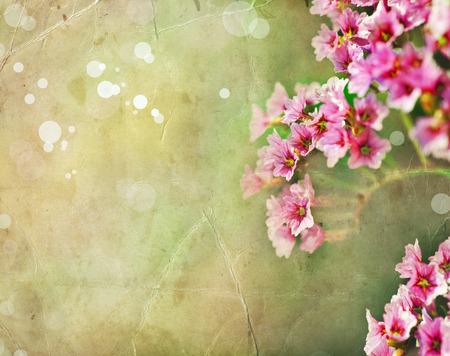 sfondo romantico: fiori rosa primavera sfondo romantico