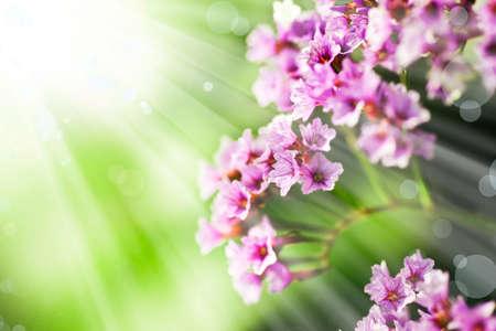 sfondo romantico: pink flowers spring romantic background