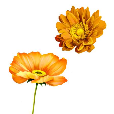 mona lisa: orange poppy, mona lisa flower Stock Photo