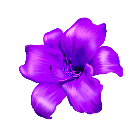 flores: illustration of bright lily. isolated on a white