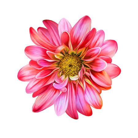 mona lisa: Mona Lisa Spring flower.Isolated on white