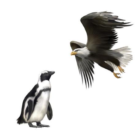 aguila calva: pingüinos gentoo, águila calva americana en vuelo