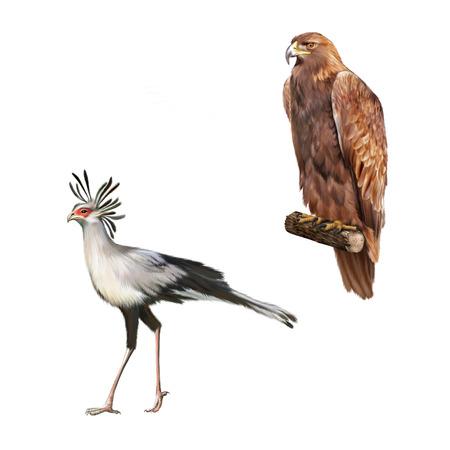 aigle royal: aigle royal orel Skalni, sagittaire Banque d'images