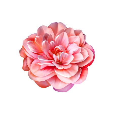 red pink: Red Pink Rose Flower