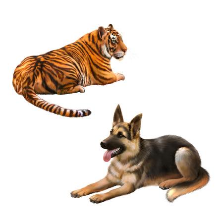 german shepard: Tiger looking away, german shepard dog