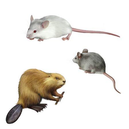 castor: Gris lindo y el ratón blanco, Beaver celebración Foto de archivo