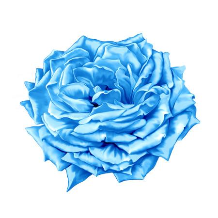 azul turqueza: Azul turquesa flor de Rose Foto de archivo