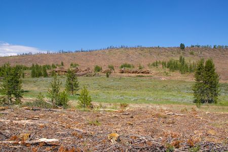 mitigate: Logging to Mitigate Pine Beetles Stock Photo