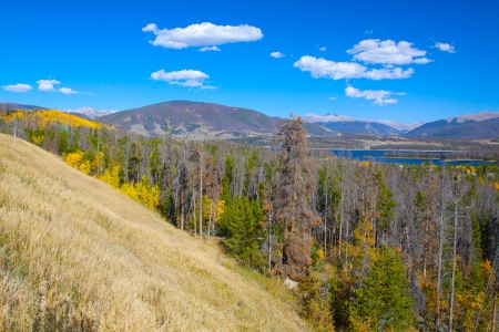 Mountain Scenic with Fall Aspen and Beetle Killed Spruce Stock Photo