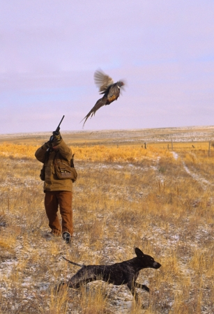 Shooting a Pheasant