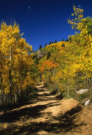 Dirt Road in Golden Aspens photo