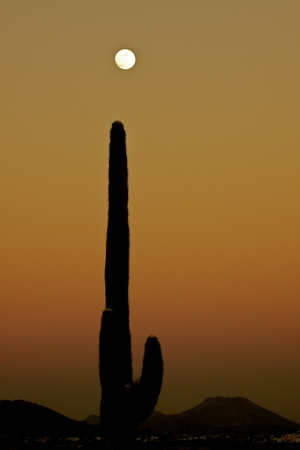 Saguaro Cactus in Sunset and Full moon photo