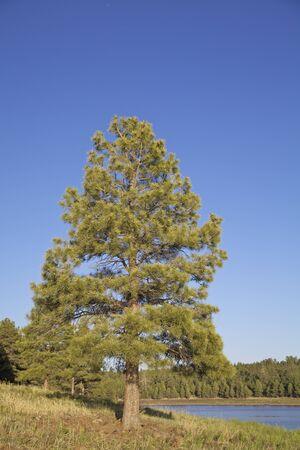 lone pine: Lone Pine y el lago Foto de archivo