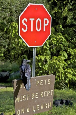 enforcing the law: Raven Enforcing Leash law