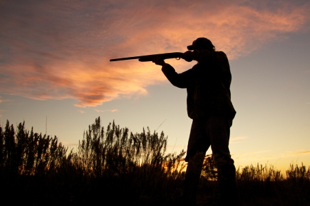 Bird Hunter Silhouetted at Sunrise Imagens
