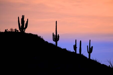 Beautiful Desert Saguaro at Sunrise