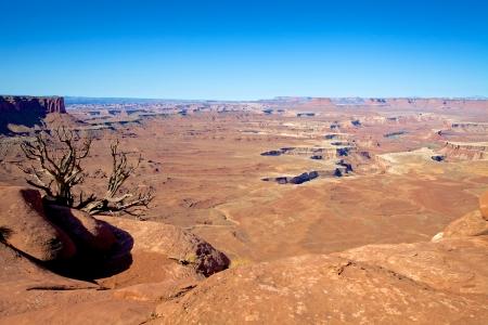 canyonlands: Canyonlands National Park Vista