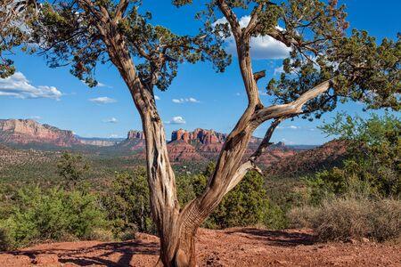 arizona landscape: Sedona Arizona Landscape