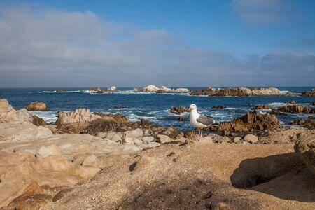 central california: Scenic Central California Coast Stock Photo