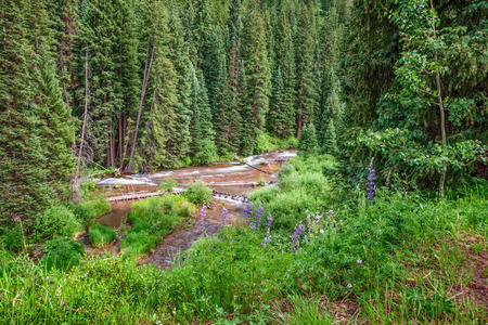 runoff: Scenic Mountain Stream