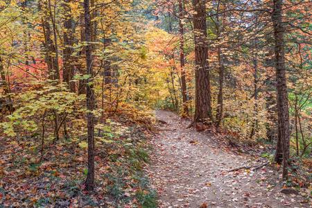sedona: West Fork Trail Sedona Arizona in Fall