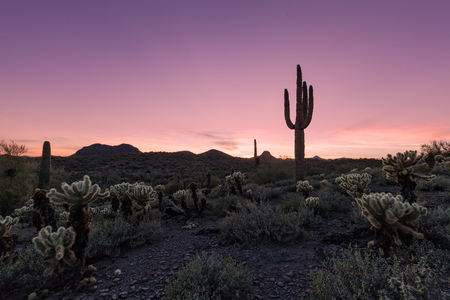 arizona sunset: Arizona Desert Sunset Stock Photo