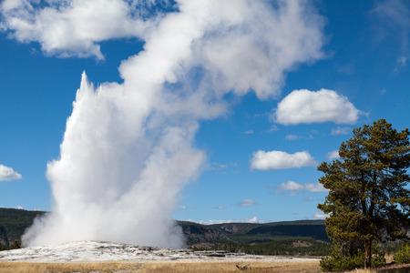 faithful: Old faithful Yellowstone N.P.
