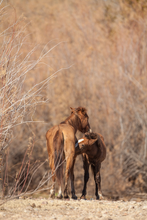 mare: Wild Horse Mare and Foal Stock Photo