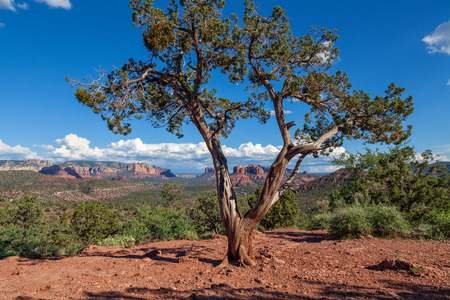 sedona: Sedona Arizona Landscape