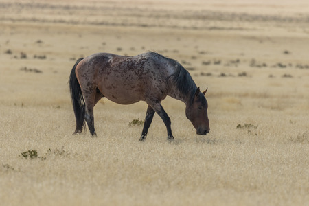 Wild Horse in the Desert Stock Photo