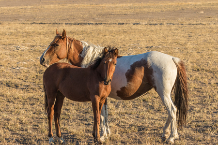 Mare and Foal Wild Horses