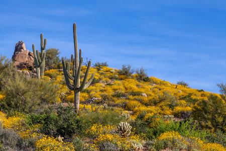 봄에 아름 다운 애리조나 사막 풍경